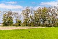 Green farmers field. Rural landscape