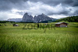The green meadows of Seiser Alm in the Dolomites - Italy