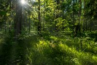 Forest landscape with trees and sun