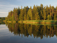 Typical Czech landscape of the Vysocina region with ponds and spruce forests