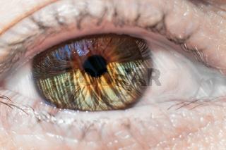 Auge Grossaufnahme