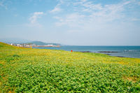 Sagye Beach and green field, Jeju Olle Trail in Jeju Island, Korea