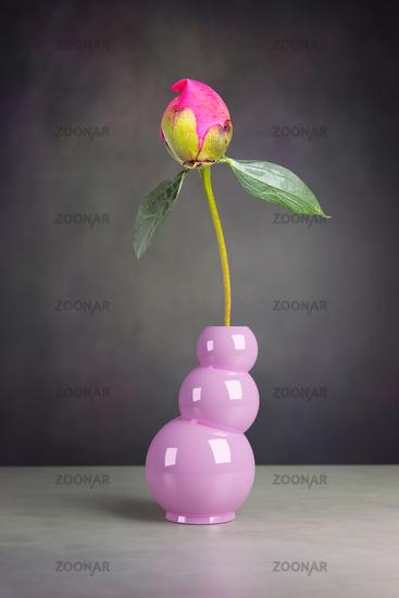 peony flower in the vase