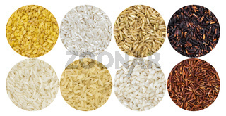 Rice pattern. Different types of rice on white background