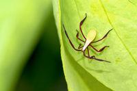 Shield Bug, Marino Ballena National Park, Costa Rica