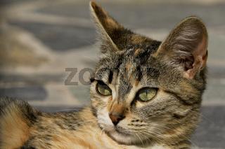 Katzenportrait auf Kefalonia