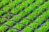 210610-220 Rasengittersteine Gras Rasen.jpg