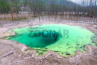 Cistern Spring of Yellowstone