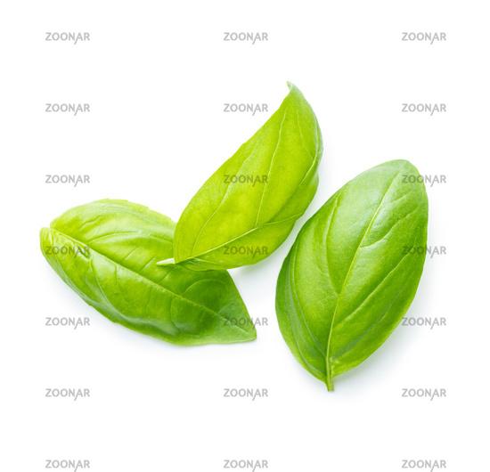 Fresh green basil leaves.