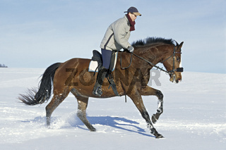 Winterausritt auf Holsteiner