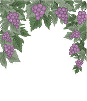 Decorations of red grapes natural background