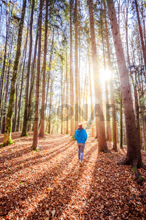 Hiking in the forest, autumn time. Girl is walking in autumnal forest, colorful leaves and sunbeam