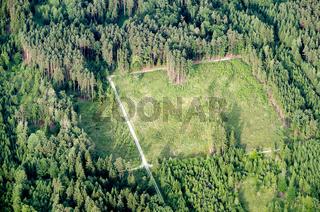 Luftaufnahme einer neu aufgeforsteten Waldfläche