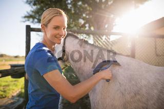 Female jockey cleaning horse with sweat scraper at barn