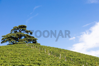 Panoramic countryside in Piedmont region, Italy. Scenic vineyard hill close to Barolo city.