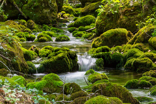 Creek in forest