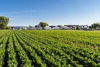 Vegetable field and greenhouses, Reichenau Island, Niederzell, Baden-Wuerttemberg, Germany