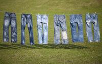 blue jeans on weadow
