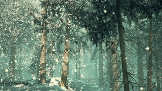 heavy snowstorm in conifer forest