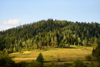 Scenic natural landscape on sunny summer day. Meadow in the middle of the forest on a mountain slope