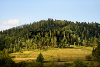 Scenic natural landscape on sunny summer day. Meadow in the middle of the forest on a mountain slope, drone shot