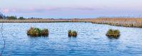 Pond Nature reserve De Omlanden in The Netehrlands