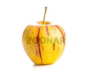 Fresh autumn apple