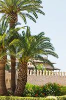 Alte Burg mit Palmen