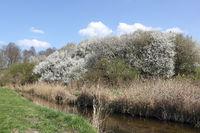 Early spring on the Tegeler Fließ in Schildow near Berlin