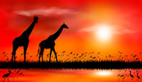 Giraffes at sunset by the lake