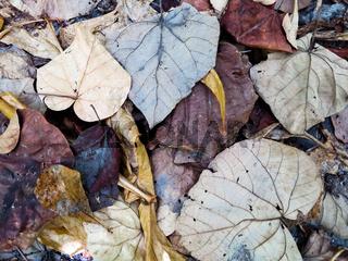 Decaying leaves, closeup shot