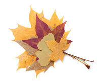 Autumn Leaves Isolated Over White Background
