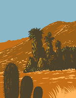 Cactus and Desert Fan Palm Growing in Santa Rosa and San Jacinto Mountains National Monument in Palm Desert California  United States WPA Poster Art