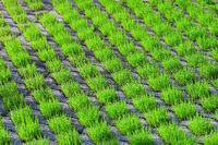 210610-222 Rasengittersteine Gras Rasen.jpg