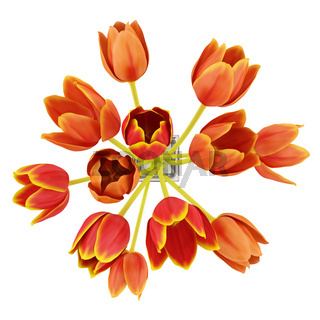 top view bouquet of orange tulips in vase isolated on white background