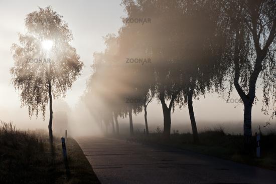 street early moring in mist