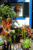 Madeira, flower sale