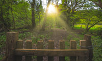 View sun rays shining on the forest path with an old wooden fence