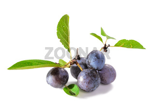 ripe blackthorn fruit with leaves on a white background with soft shadow