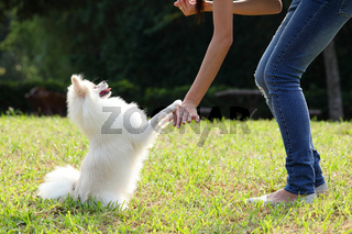 woman train her dog