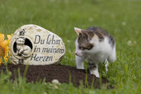 animal cemetery, cat on grave