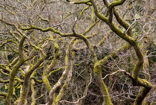 Gnarled branches of many trees