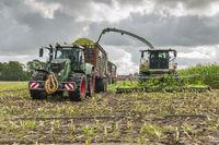 Corn harvest vehicles frontal phase 5