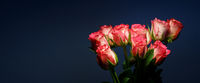 Pink roses on a blue background