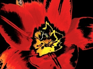 Tulpe abstrakt I