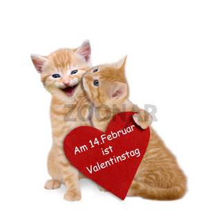Two enamored cats with red heart on valentine