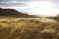 dusk in savanna