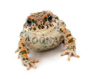 toad sitting