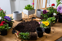 Top view of various flowers in pots stand around the soil