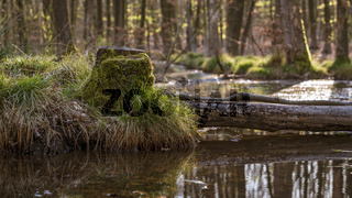 Springtime forest in Bottrop, North Rhine-Westphalia, Germany